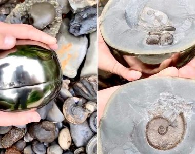 Fossil hunter finds 185M year-old 'golden snitch' with ancient sea creature inside