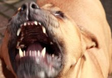 Massachusetts woman mauled to death by her dog while suffering seizure, authorities say