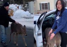 Deer walks Minnesota man home, demands pets in adorable viral video