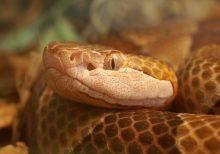 'Unluckiest' hunter in America jumps headfirst into rare tree-dwelling venomous snake