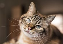 Cat in Belgium first known to test positive for coronavirus: report