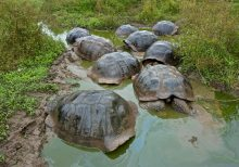 Moby-Dick and the Galápagos Tortoises